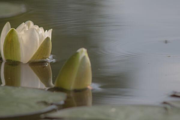 慈悲の瞑想 マインドフルネス