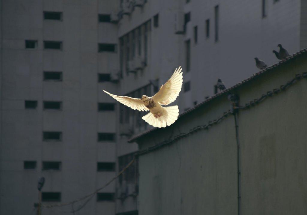マザーテレサ 名言 平和
